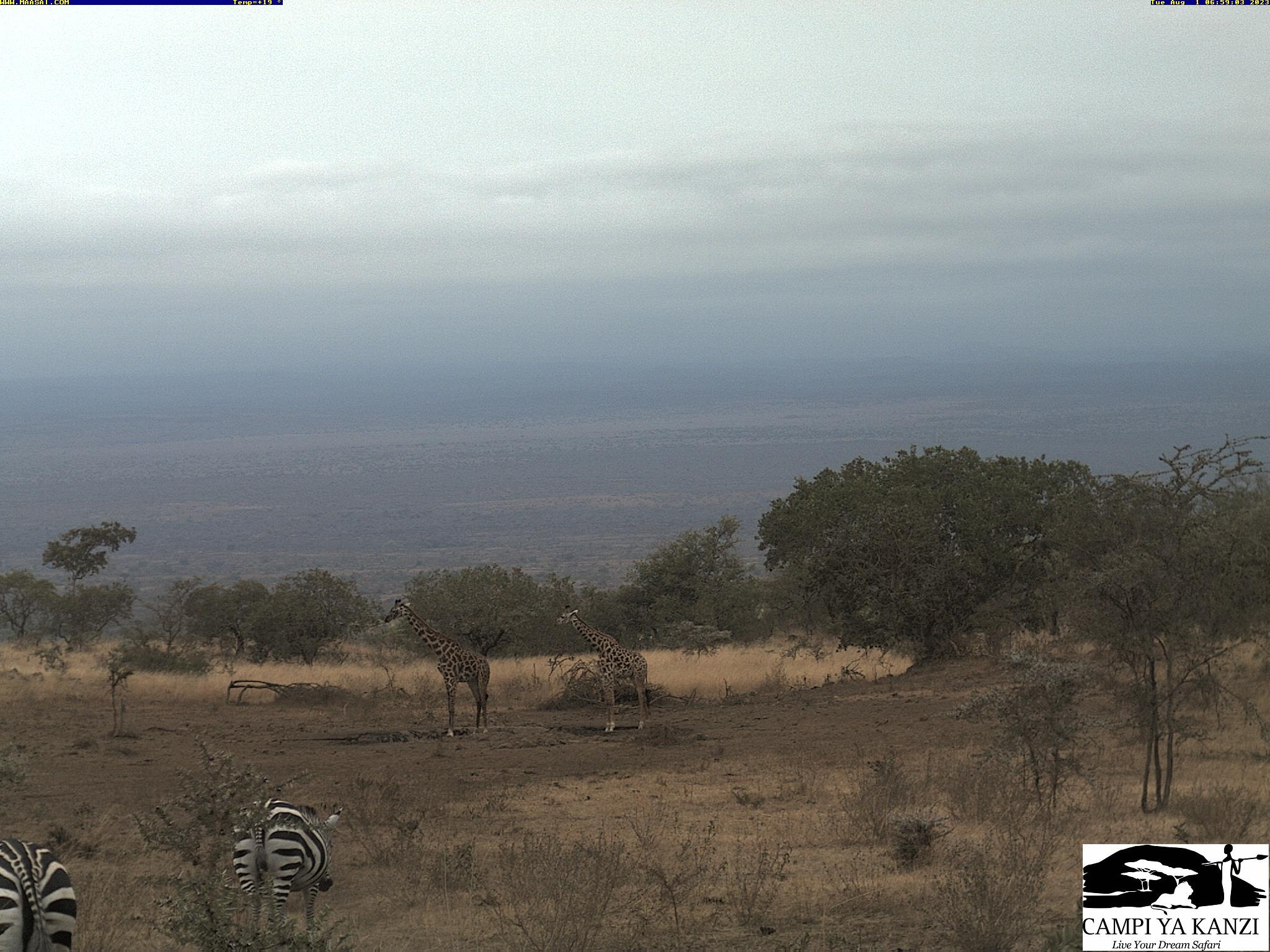 Kanzi Camp Webcam in den Chyulu Hills